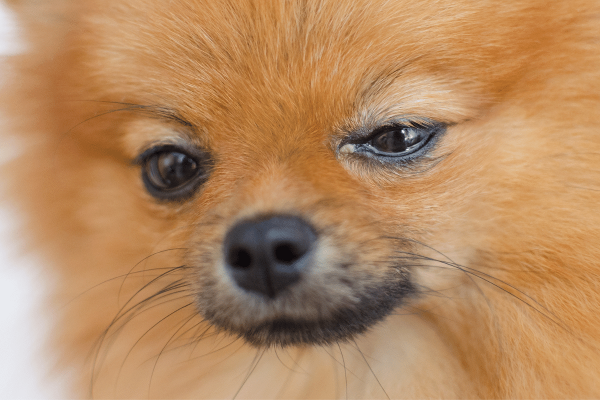 can humans get pink eye from a dog