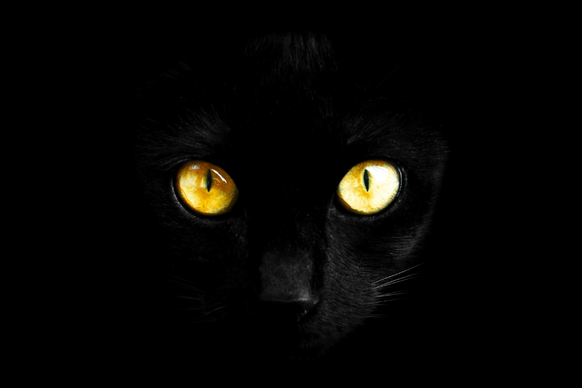 do cats see color