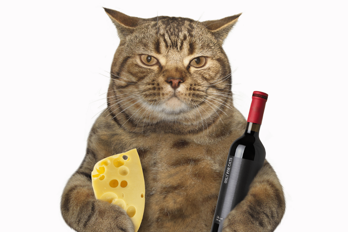 do cats eat cheese
