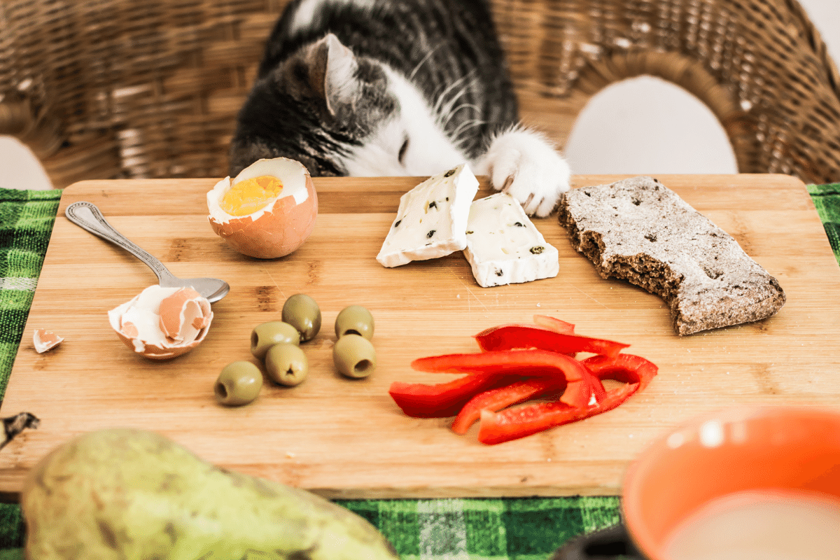 can cat eat cheese
