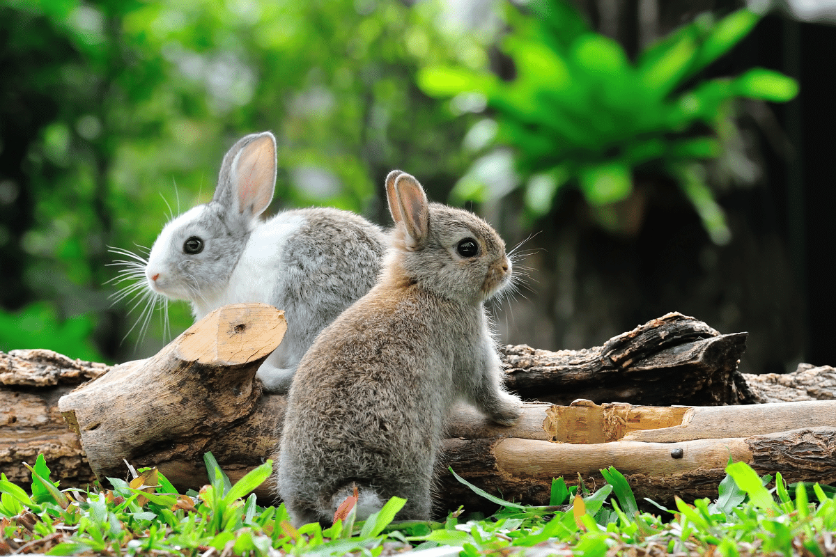 are grapes safe for rabbits