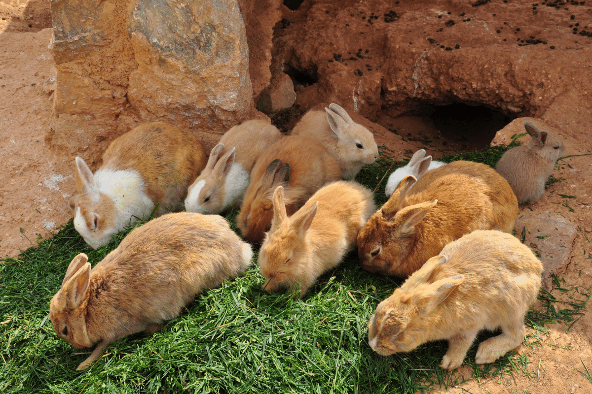 are tomatoes toxic to rabbits